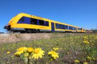 Mehr als 10.000 Zimtsterne werden in der Adventszeit in den oberpfalzbahn-Zügen verteilt