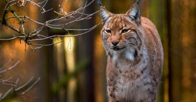 Lohberg: Bayerwald-Tierpark