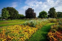 Blühstreifen im egapark