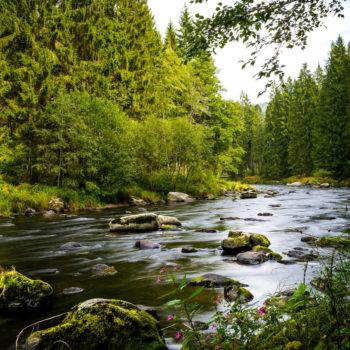 Bayerisch Kanada und der schwarze Regen mit Steinen im Wasser
