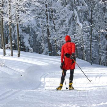 Ein Langläufer in roter Kleidung der auf der Langlaufstrecke durch den Wald fährt